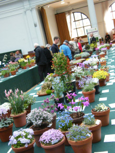 2012-04-11-rhs-plant-fair-alpine-tables-6