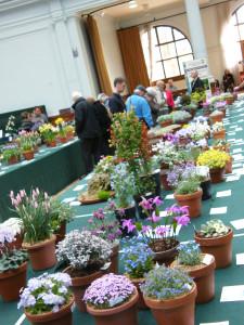 2012-04-11-rhs-plant-fair-alpine-tables-6