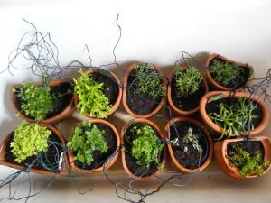 herb-pots-2
