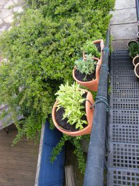 herbs-on-fire-escape-6
