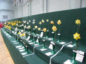 rhs-daffodil-show-1
