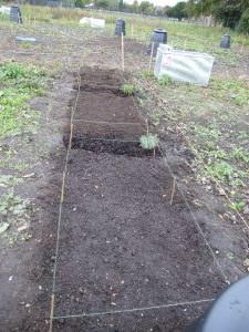 2013-10-19-after-planting-3