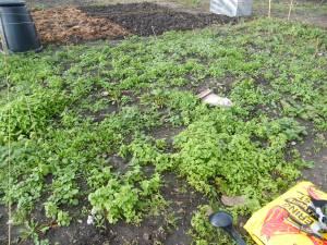 tf-pre-weeding